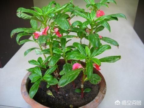 符合屋顶培植的果木和花卉有哪些?
