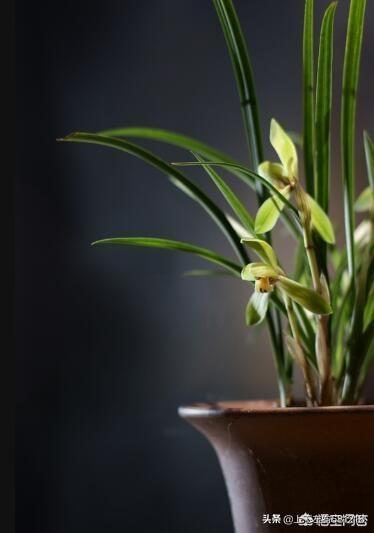 干什么有的人养植被很难赡养,有的人却很简单呢?